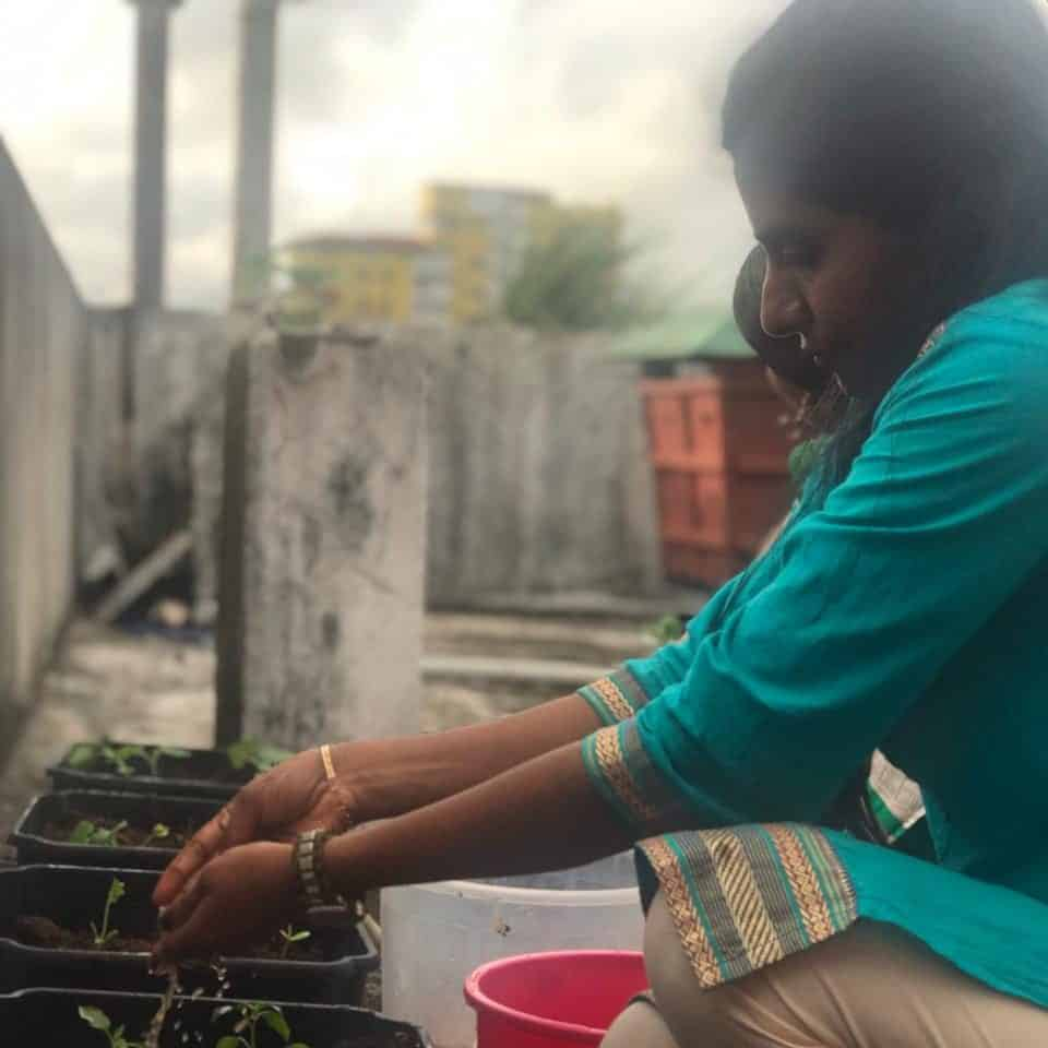 Harithapoorna indoor planting